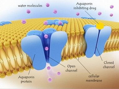 Chapter 2 The Structure Of Biological Membranes Borzuya