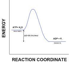 atp hydrolysis 2