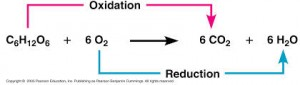 oxidation de glucose