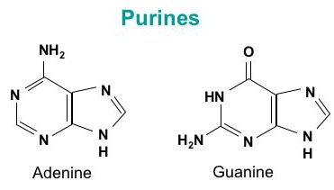 Purine structure numbered