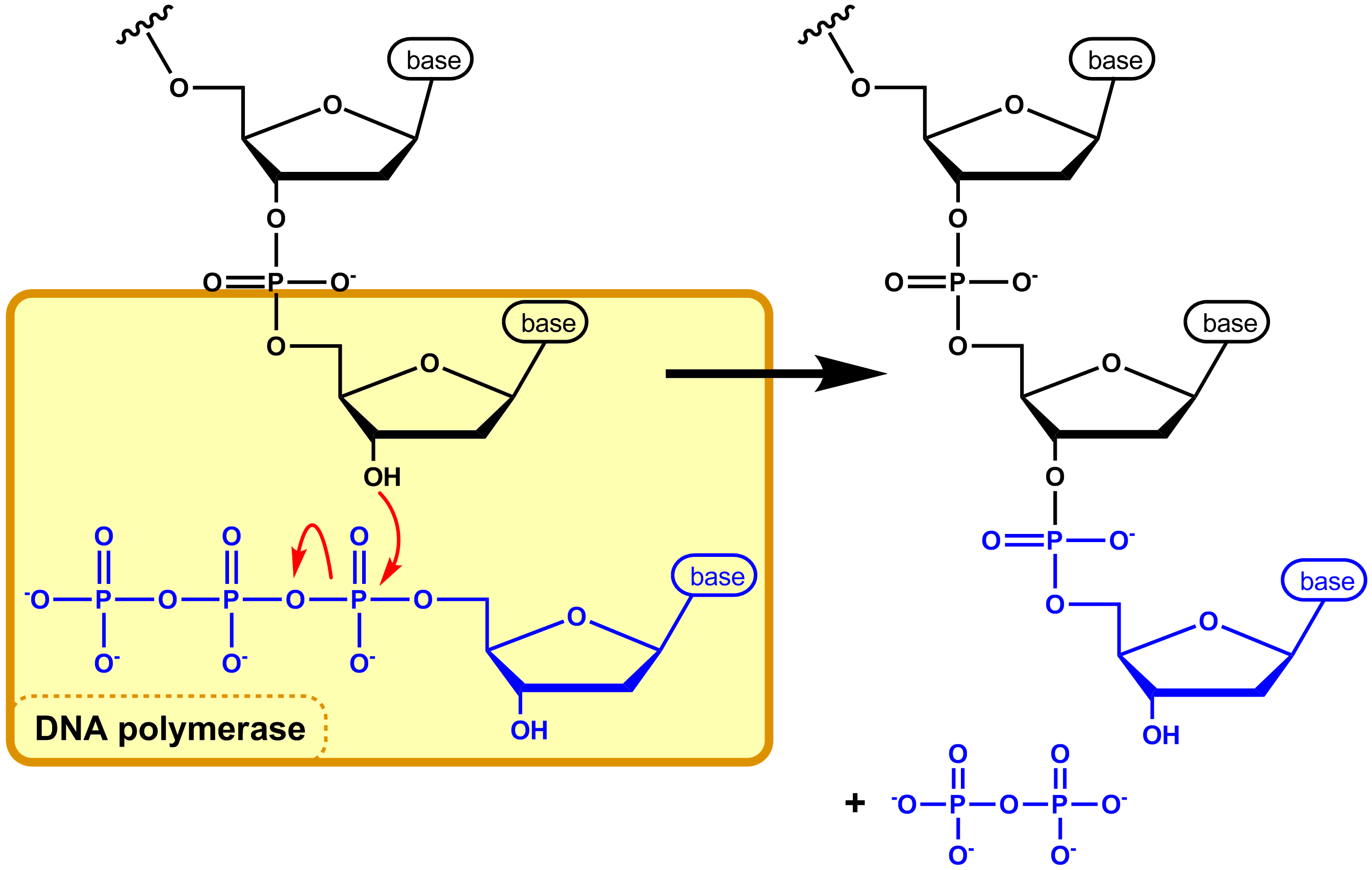 DNA POLY 4